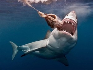 521626-experts-says-shark-cull-would-be-pointless